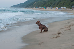 Lonely dog. Lonely wet dog is sitting on the beach waiting for his master royalty free stock photo