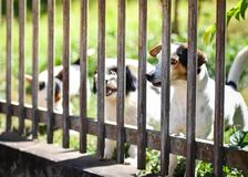 Waiting dogs behind the fence. The lonely dogs behind bars Stock Photo