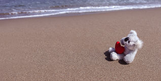 Lonely dolls on sand Royalty Free Stock Photography