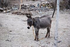 Lonely donkey in an anatolian village