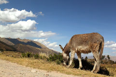 Lonely  donkey in mountains Royalty Free Stock Images