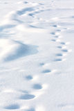 Lonely drifted tracks on white snow Stock Photography
