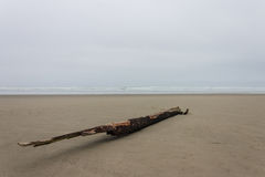 Lonely Driftwood. Pacific ocean driftwood left behind by storm Royalty Free Stock Photo