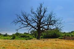 Lonely dry tree Stock Photo