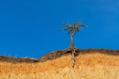 Lonely dry tree Stock Image