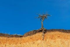 Lonely dry tree Stock Image