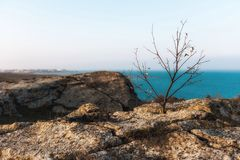 Lonely dry tree on coast Royalty Free Stock Image