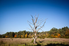Lonely dry tree Stock Photo