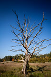 Lonely dry tree Royalty Free Stock Photography