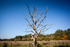 Lonely dry tree Stock Photography