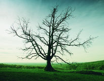 Lonely dry tree Royalty Free Stock Photos