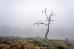 Lonely and dry tree Royalty Free Stock Photography