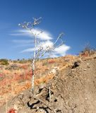 Lonely dry tree on the mountain slope in Crimea Royalty Free Stock Photos
