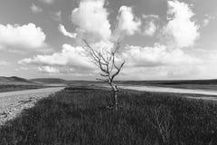 Dry tree near the road royalty free stock photography