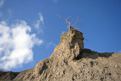 Lonely dry tree at the rock Stock Photos