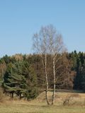 Lonely dry tree. South Bohemia Stock Photography