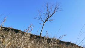 Lonely dry tree standing on the ground grass nature landscape movement. Lonely  dry tree standing on the ground grass nature landscape movement stock video footage