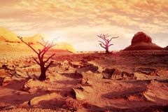 Lonely dry trees in the desert against a beautiful red, pink  and yellow sky and clouds. Artistic natural image. Alien Planet Concept. Climate change Stock Photography