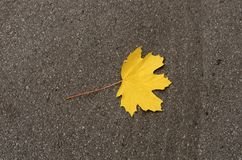 Lonely dry yellow leaf on the asphalt. Lonely dry yellow leaf on the asphalt; The symbol of autumn Royalty Free Stock Photos