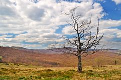 Lonely dying tree in the mountains Royalty Free Stock Photography