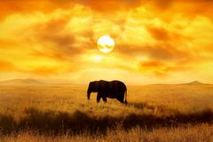 Lonely Elephant against sunset and beautiful sun and clouds in savannah. Serengeti National Park. Africa. Tanzania. Artistic imag stock images