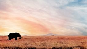 Lonely elephant in the savannah at sunset . African artistic image. National park Serengeti Stock Photo