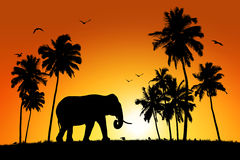 Lonely elephant on tropical sunset background Royalty Free Stock Photo