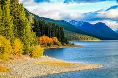Lonely fall colours in Kananaskis Country. Lone stand of colourful trees, Alberta, Canada Royalty Free Stock Image