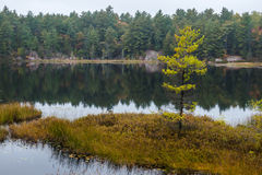 Lonely Fall Tree On A Small Island In A Lake Royalty Free Stock Photography