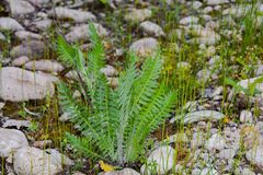 Lonely fern Stock Images
