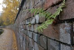 Lonely fern in a wall Royalty Free Stock Image