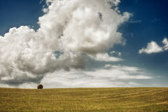 Lonely in the field Stock Photography