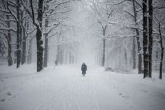 Lonely figure in the snow. Lonely figure in the park alley in a heavy snowfall Royalty Free Stock Photos