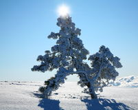 Lonely fir on a snow field. Royalty Free Stock Images