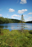 Lonely fir-tree. Photo of lonely fir-tree on a lake, Algonquin Provincial Park, Ontario, Canada Stock Photography