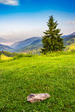 Lonely fir tree on the edge of slope in foggy mountains at sunri Royalty Free Stock Images