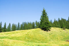 Lonely fir tree on a hill. Landscape Stock Image