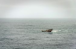 A lonely fishing boat on the big waves Stock Image