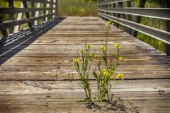 Lonely flower on bridge Royalty Free Stock Photo