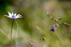 Lonely Flower. Flower closeup in the outskirts of Laureto, Italy royalty free stock images
