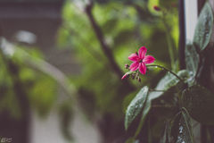 Lonely Flower Royalty Free Stock Images