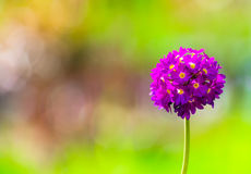 Lonely flower in the park in the spring Royalty Free Stock Photography