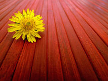 Lonely flower Royalty Free Stock Photos