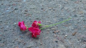 Lonely Flowers on Cold Asphalt Royalty Free Stock Photo
