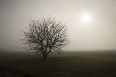 Lonely in the fog Royalty Free Stock Images