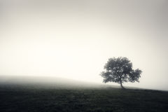 Lonely foggy tree in black and white Royalty Free Stock Photography