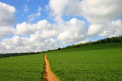 Lonely footpath through field Royalty Free Stock Photos