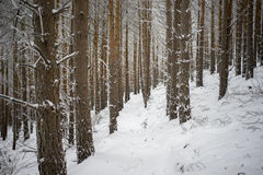 Lonely footpath in forest in winter Royalty Free Stock Photos