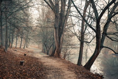 Lonely footpath running under leafless trees. Along a calm river stock photo
