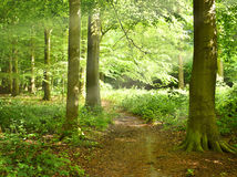 Lonely footpath through woods stock photo